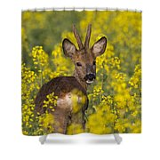 110714p139 Shower Curtain