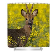 110714p140 Shower Curtain