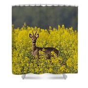 110714p143 Shower Curtain