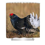 110714p155 Shower Curtain