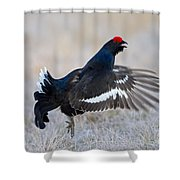 110714p165 Shower Curtain