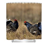 110714p175 Shower Curtain