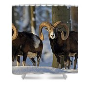 110714p266 Shower Curtain