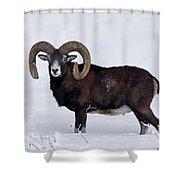 110714p275 Shower Curtain
