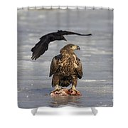110714p311 Shower Curtain
