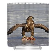110714p312 Shower Curtain