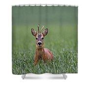 110714p319 Shower Curtain