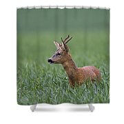 110714p320 Shower Curtain