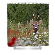 110714p324 Shower Curtain