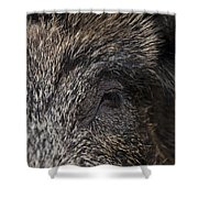 110714p340 Shower Curtain