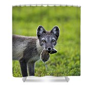 111130p048 Shower Curtain