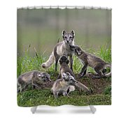 111130p059 Shower Curtain
