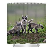 111130p062 Shower Curtain