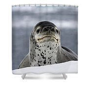 111130p133 Shower Curtain