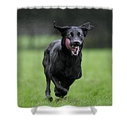 111130p196 Shower Curtain