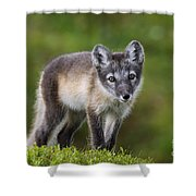 111216p021 Shower Curtain