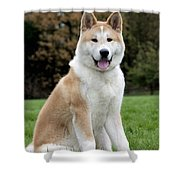 111216p241 Shower Curtain