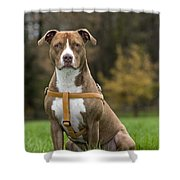 111216p247 Shower Curtain