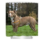 111216p248 Shower Curtain