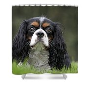 111216p256 Shower Curtain