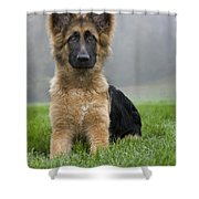 111216p331 Shower Curtain