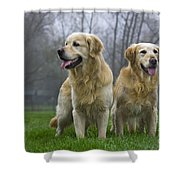 111230p057 Shower Curtain