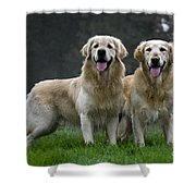 111230p058 Shower Curtain