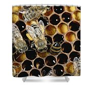 Honey Bees On Honeycomb Shower Curtain