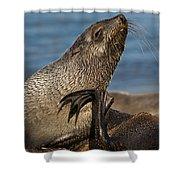 Antarctic Fur Seal Shower Curtain