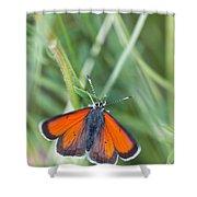 12 Balkan Copper Butterfly Shower Curtain