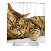Bengal Brown Spotted Tabby Shower Curtain