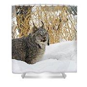 Canadian Lynx Shower Curtain