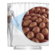 Intestinal Villi Shower Curtain