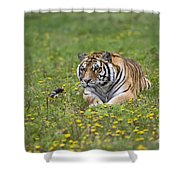 Siberian Tiger, China Shower Curtain