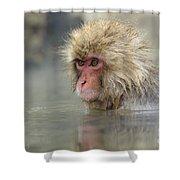 Snow Monkeys Shower Curtain
