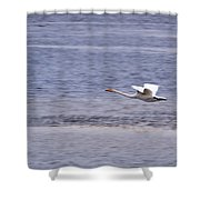 Whooper Swan Shower Curtain