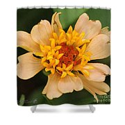 Zinnia From The Candy Mix Shower Curtain