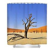 120118p018 Shower Curtain