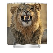 120118p047 Shower Curtain