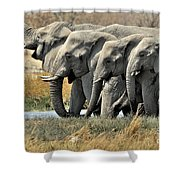 120118p051 Shower Curtain