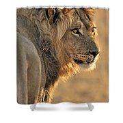 120118p093 Shower Curtain