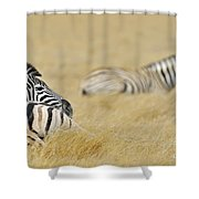 120118p096 Shower Curtain