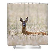 120425p012 Shower Curtain