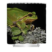 120520p062 Shower Curtain