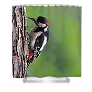 120520p269 Shower Curtain