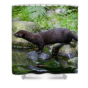121213p013 Shower Curtain