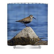 121213p019 Shower Curtain