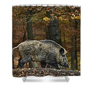 121213p284 Shower Curtain