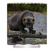 121213p346 Shower Curtain