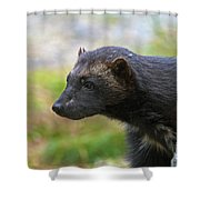 121213p352 Shower Curtain